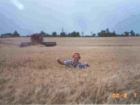 20000807-wheat-field