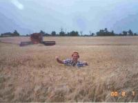 20000807-wheat-field